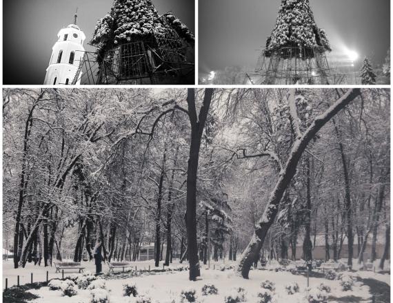 Vilniaus kalėdinė eglė po visų žiemos švenčių yra ardoma. Fone aukšta Vilniaus katedros apšviesta varpinė ir eglės konstrukcijos. Kitoje nuotraukoje senas ir apsnigtas parkas. Daug sniego ir labai šalta. Parko viduryje yra ovalo formos gėlynas, kuriame po sniegu ir kalėdinės eglės šakomis slepiasi rožės ir kitos žiemai paruoštos gėlės.