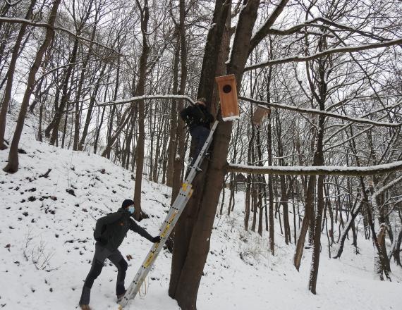 Nuotraukoje daug medžių. Žiema, daug sniego. Nuotraukos viduryje yra medis, į kurį atremtos stovi kopečios. Vienas žmogus laiko kopečias. Jis yra apsirengęs pilkos spalvos darbiniais rūbais, su kepure ir veidą dengenčia kauke. Kopečių viršuje yra kitas žmogus, kuris kabina inkilą. Jis taip pat yra apsirengęs darbiniais rūbais, su kepure ir juoda veido kauke. Inkilas yra labai didelis, turi plačią angą, padarytas iš šviesaus medžio.